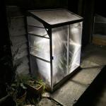 grow lights help to get seeds growing