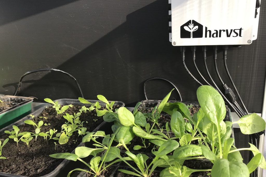 Growing in small spaces