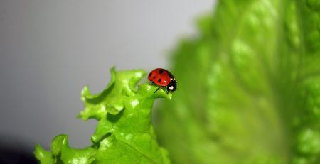 Freindly bug in your garden
